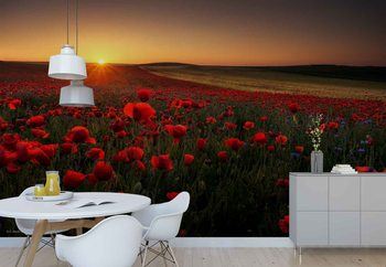 Sunrise Between Poppies Wallpaper Mural