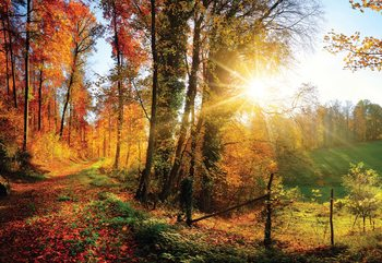 Sunrise In Autumn Forest Wallpaper Mural