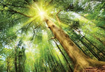 Sunshine Trees In The Forest Wallpaper Mural