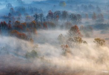 Trees In The Early Morning Fog Wallpaper Mural