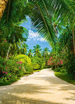 TROPICAL PATHWAY Wallpaper Mural