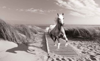 White Horse Beach Grey Wallpaper Mural