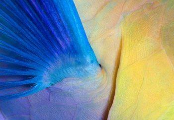 Wings Wallpaper Mural