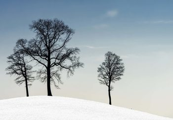 Winter Haiku Wallpaper Mural