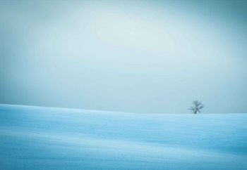 Winter In Solitude Wallpaper Mural