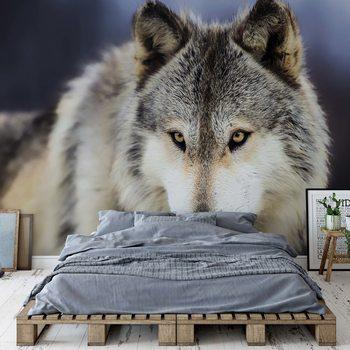 Wolf Wallpaper Mural
