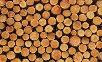Wood Texture Logs Nature Wallpaper Mural