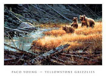 Yellowstone Grizzlies Reproduction d'art