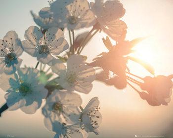 Fleur - soleil Affiche