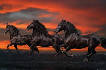Les chevaux - Fantasy, Bob Langrish Affiche