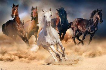 Les chevaux - Five horses Affiche