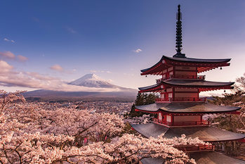 Mount Fuji Blossom Affiche