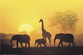 Sunset in Kenia Affiche