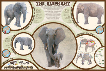 The elephant Affiche