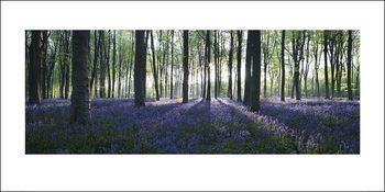 Impressão artística Forest - Blue
