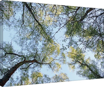 Alyson Fennell - Spring Morning Tree Tops Canvas Print