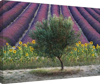 David Clapp - Olive Tree in Provence, France Canvas-taulu