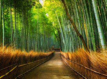 Decoração de parede Bamboo - Path in the Forest