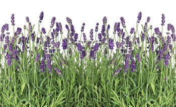 Papel de parede  Flowers Lavender