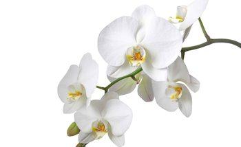 Papel de parede Flowers Orchids Nature White