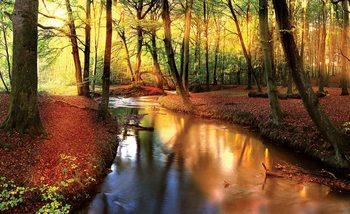 Papel de parede Forest River Beam Light Nature