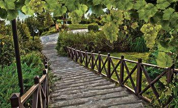 Papel de parede Path Grapes Nature