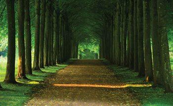 Papel de parede Path Trees Forest Nature