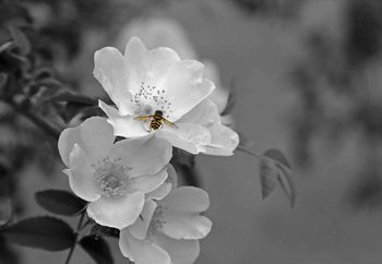 Glass Art  Bee Blossom