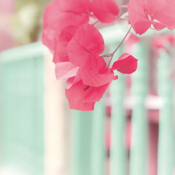Glass Art Pink Blossoms and Fence