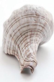 Glass Art Shell - Back