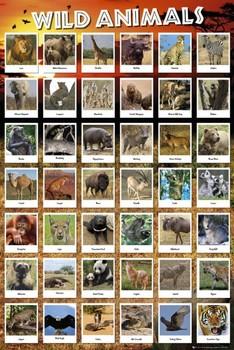 Juliste Animals