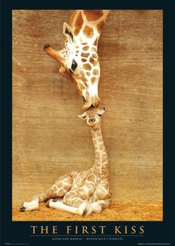 Juliste The first kiss - giraffes
