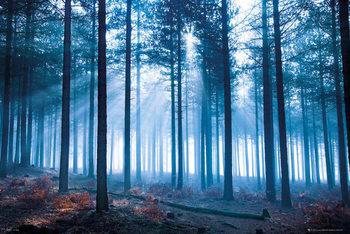 Juliste Tom Mackie - forest