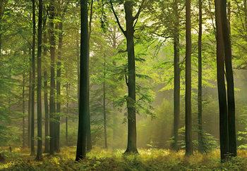 AUTUMN FOREST Kuvatapetti, Tapettijuliste