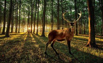 Deer Forest Trees Nature Valokuvatapetti