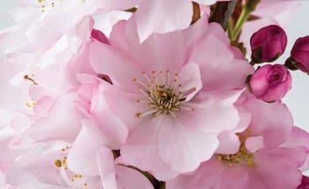 Flowers Blossoms Nature Pink Valokuvatapetti