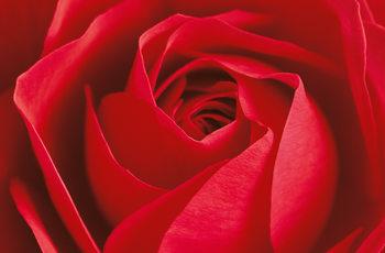 L´IMPORTANT C´EST LA ROSE Kuvatapetti, Tapettijuliste