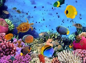 Meri - Under the sea Kuvatapetti, Tapettijuliste