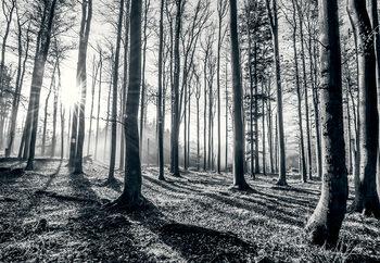 Metsä - Black and white Kuvatapetti, Tapettijuliste