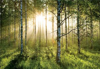 Metsä - Golden Sunbeams Kuvatapetti, Tapettijuliste