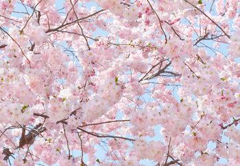 Pink Blossoms Kuvatapetti, Tapettijuliste