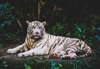 Lasitaulu  White Tiger