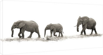Mario Moreno - The Elehants Canvas Print