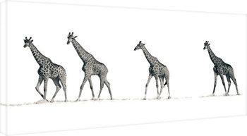 Mario Moreno - The Giraffes Canvas Print
