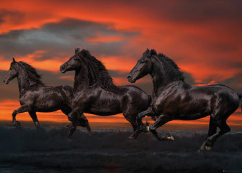 Poster Bob Langrish - Fantasy Horses
