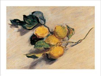 Branch from a Lemon Tree Art Print