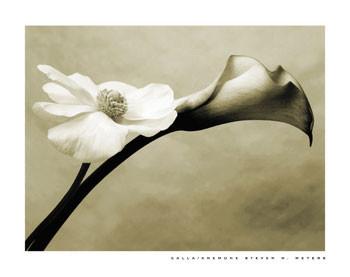 CALLA/ANEMONE Art Print