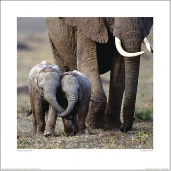 Elephant - Friends Art Print