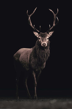 Kings of Nature - Hirsch Poster
