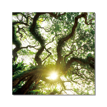Old Green Treetop Mounted Art Print